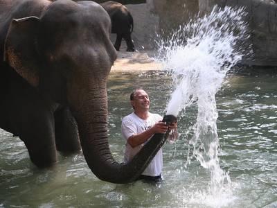 «Synsk» elefant varsler ett tysk EM-poeng mot Ungarn