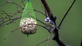 Eksperter advarer mot meiseboller i netting