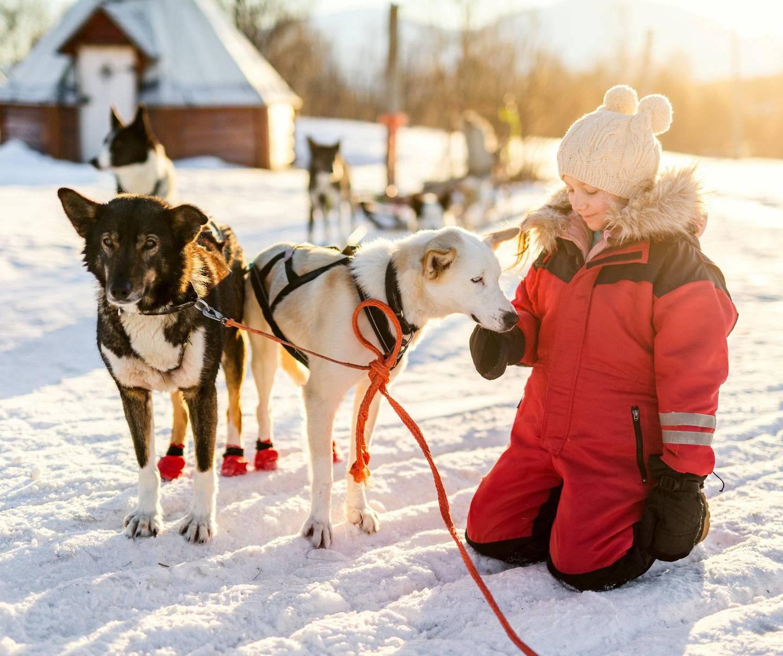 Mange steder i Finnmark finnes det muligheter for å kjøre med hundespann. Illustrasjonsfoto: Shutterstock/NTB
