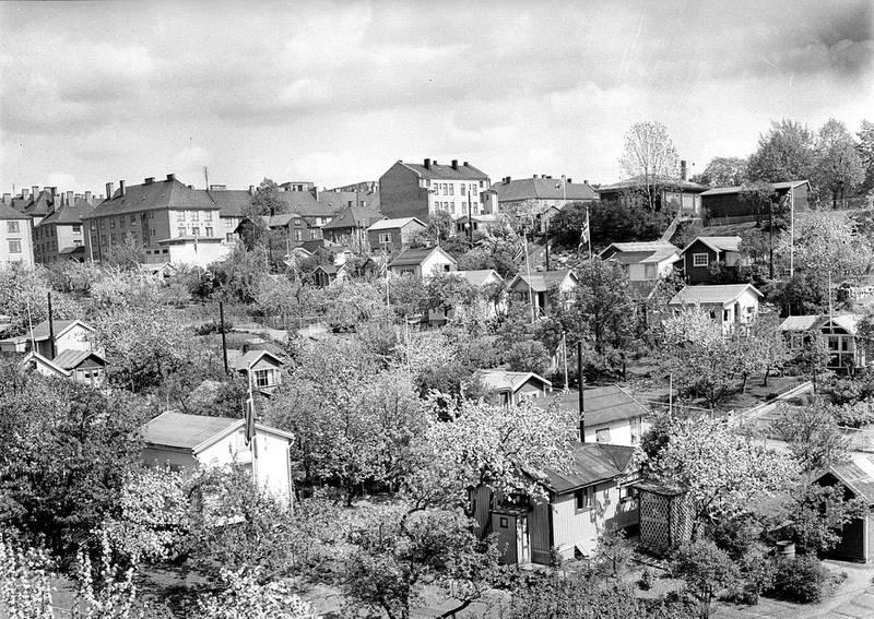 Rodeløkkens kolonihager har blitt både utvida og forminska opp gjennom åra og består nå av 151 parseller. Bildet er fra 1957.