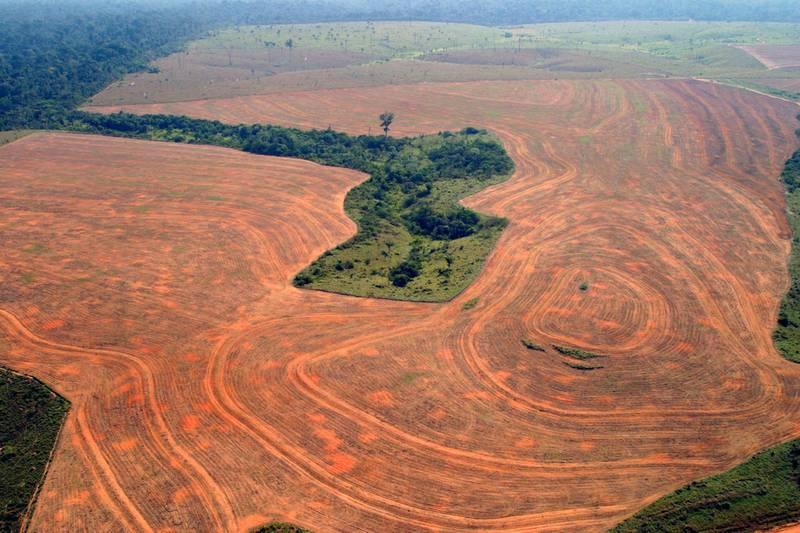 Skogrydding for å skaffe til veie større arealer for bønder, er den største trusselen mot verdens treslag, ifølge den nye rapporten State of the World´s Trees. Bildet viser et område i Brasil som er blitt ryddet for produksjon av soyabønner.