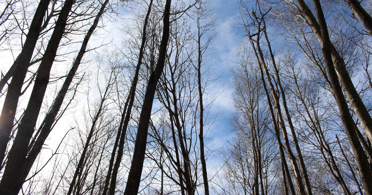 Skogens estetikk - på hvilke premisser?