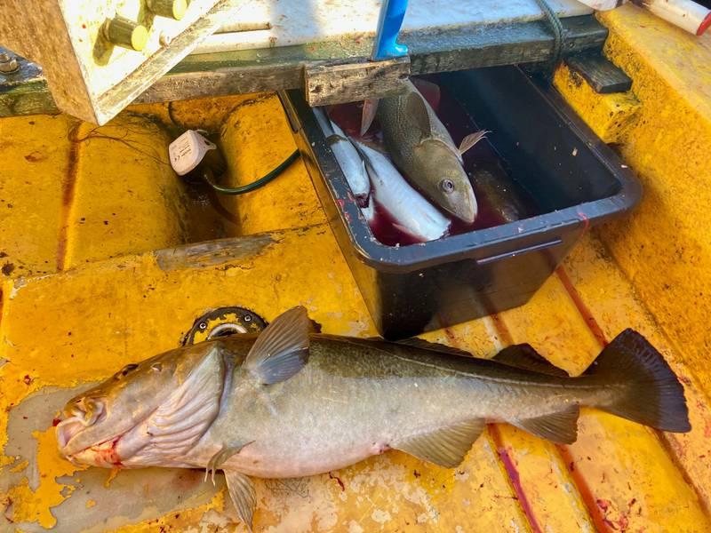 Nord-Norge er perfekt, her får man alltid fisk, sier eventyrer Johnny Leo Johansen.