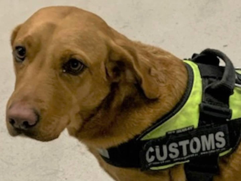 Narkotikahunden My snuste seg fram til narkotikaen i førerhytta.