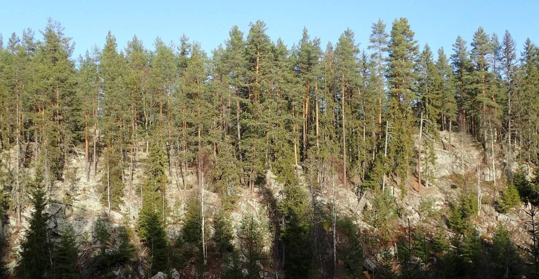 Det er nærmere 2.400 truede arter i Norge. Av dem lever om lag halvparten i skogene våre. I Follsjå-området i Notodden er det så langt funnet 85 rødlistearter. Likevel pågår det omfattende hogst i samme område.