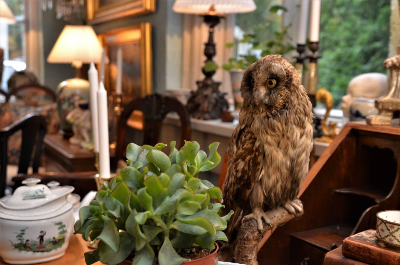 Antikvitetsbutikken Antiqua et Hodierna på Hvaler er åpen etter avtale.