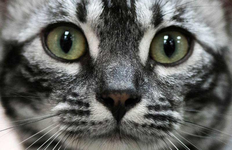 Appen Tably kan se om katten din har det bra