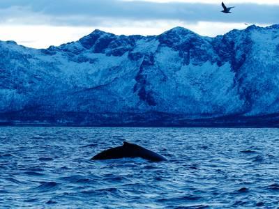 Fisker hevder han ble slukt av en hval: – Var i munnen i 30 sekunder