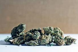 Skal ha hatt 23 gram marihuana og skjelt ut politiet