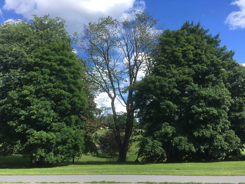 Blant annet i Torshovdalen har Bymiljøetaten i Oslo kommune registrert trær som skranter, trolig som følge av den langvarige tørken for rammet store deler av Norge for to år siden.