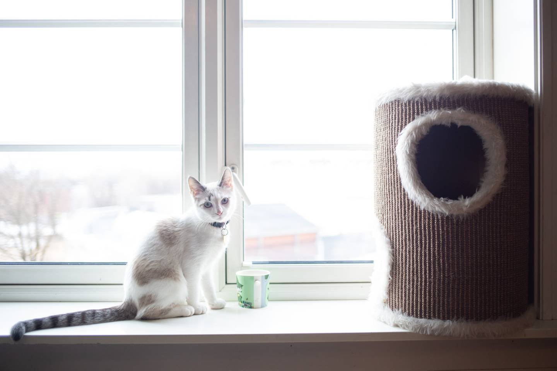 Katten Halloumi er en blanding av nakenkatt og huskatt. Han elsker å sitte i vinduskarmen og følge med på bylivet utenfor.