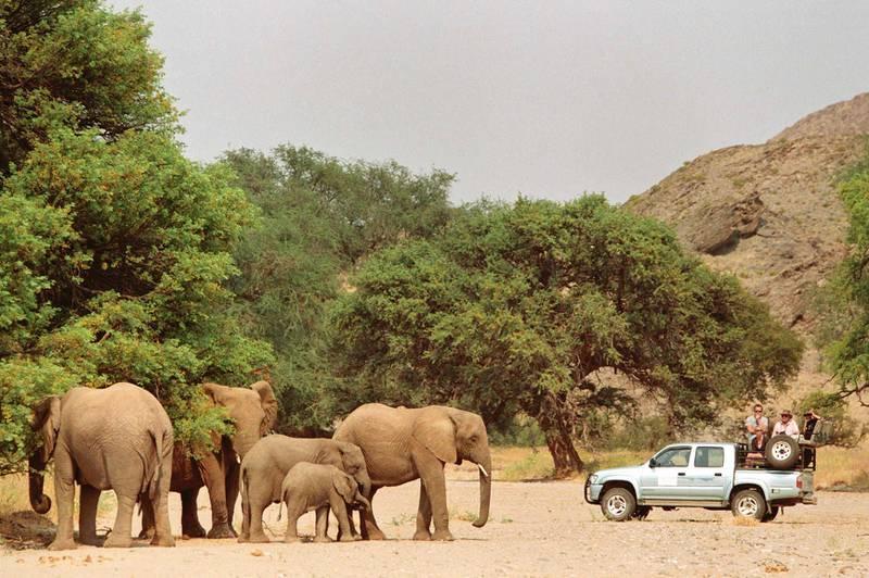Afrikas dyr er verdt milliarder av kroner bare ved sin blotte eksistens, fordi de er turistmagneter. Bare til Namibia var det ventet 1,9 millioner turister i løpet av inneværende år.
