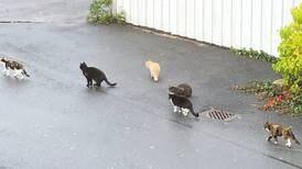 Kattekrisen i Fredrikstad-nabolag: – Provoserende at kommunen ikke gjør noe