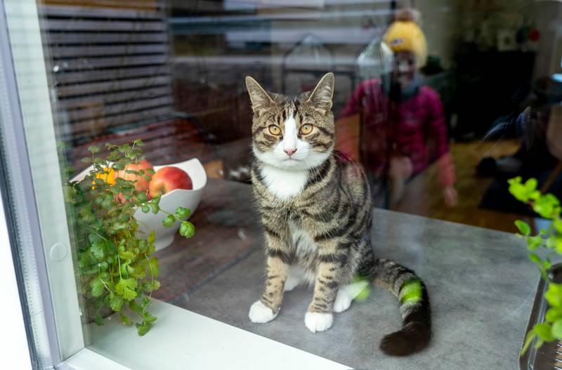 Trondheim 20200409.  Katt som sitter i vinduskarmen. Foto: Gorm Kallestad / NTB scanpix