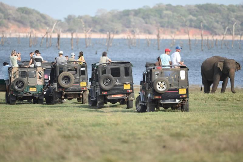 I mange land bidrar safarier til store inntekter. Bildet er fra Kaudulla nasjonalpark i Sri Lanka.