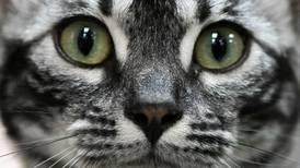 Appen for deg som vil vite om katten har det bra