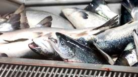 Fisken sel vi utan EØS. Alternativet finst.