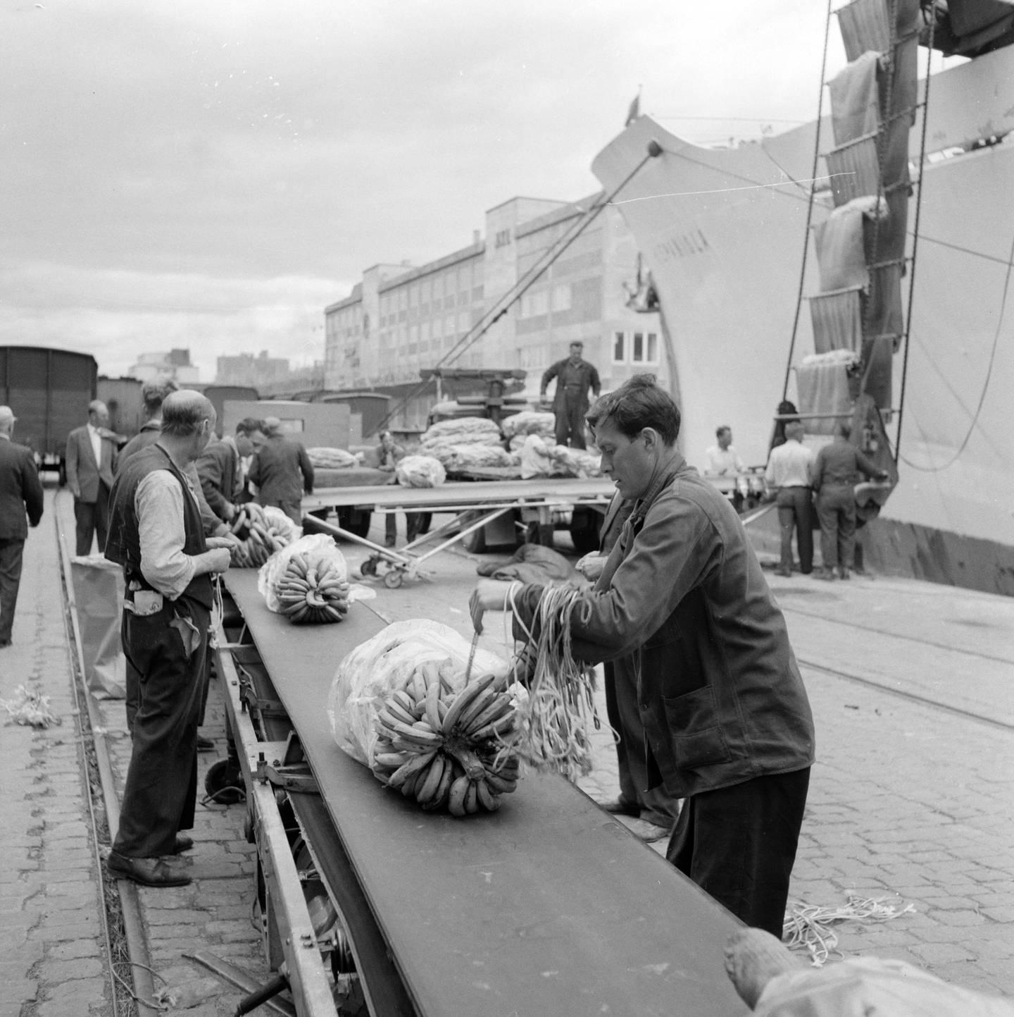 Bryggearbeidere losser bananer på samlebånd i juli 1957.