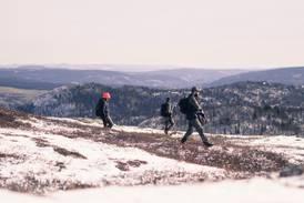 Halve Norge er uten statlig skog: – Svekker garantien for allmenn tilgjengelighet