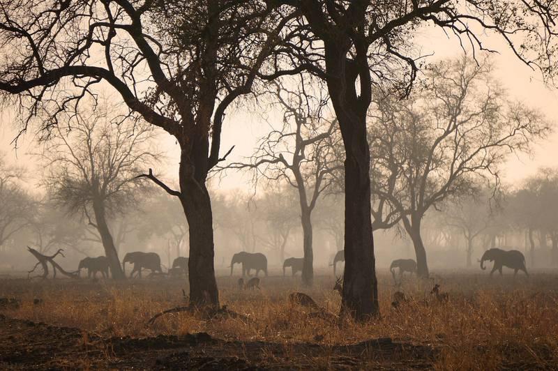 South Luangwa i Zambia er en av de beste og mest dyretette nasjonalparkene i verden, spesielt for å se store flokker av ville elefanter. ALLE FOTO: CHRISTINE BAGLO