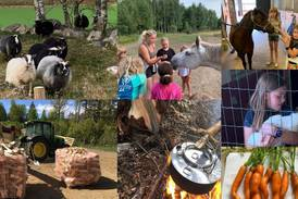 Gratis høstferieaktiviteter i Fredrikstad