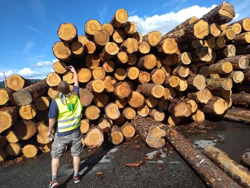 Naturvernforbundet fant en god del tømmer fra Follsjå-området under sin aksjon. Mye av skogen i dette området består av gamle, grove furutrær, som er verdifulle både for skogeierne og for mange arter.