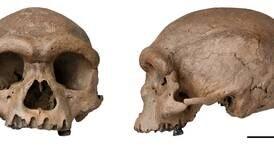 – «Dragemannens» hodeskalle kan tilhøre en nærmere slektning enn neandertalerne