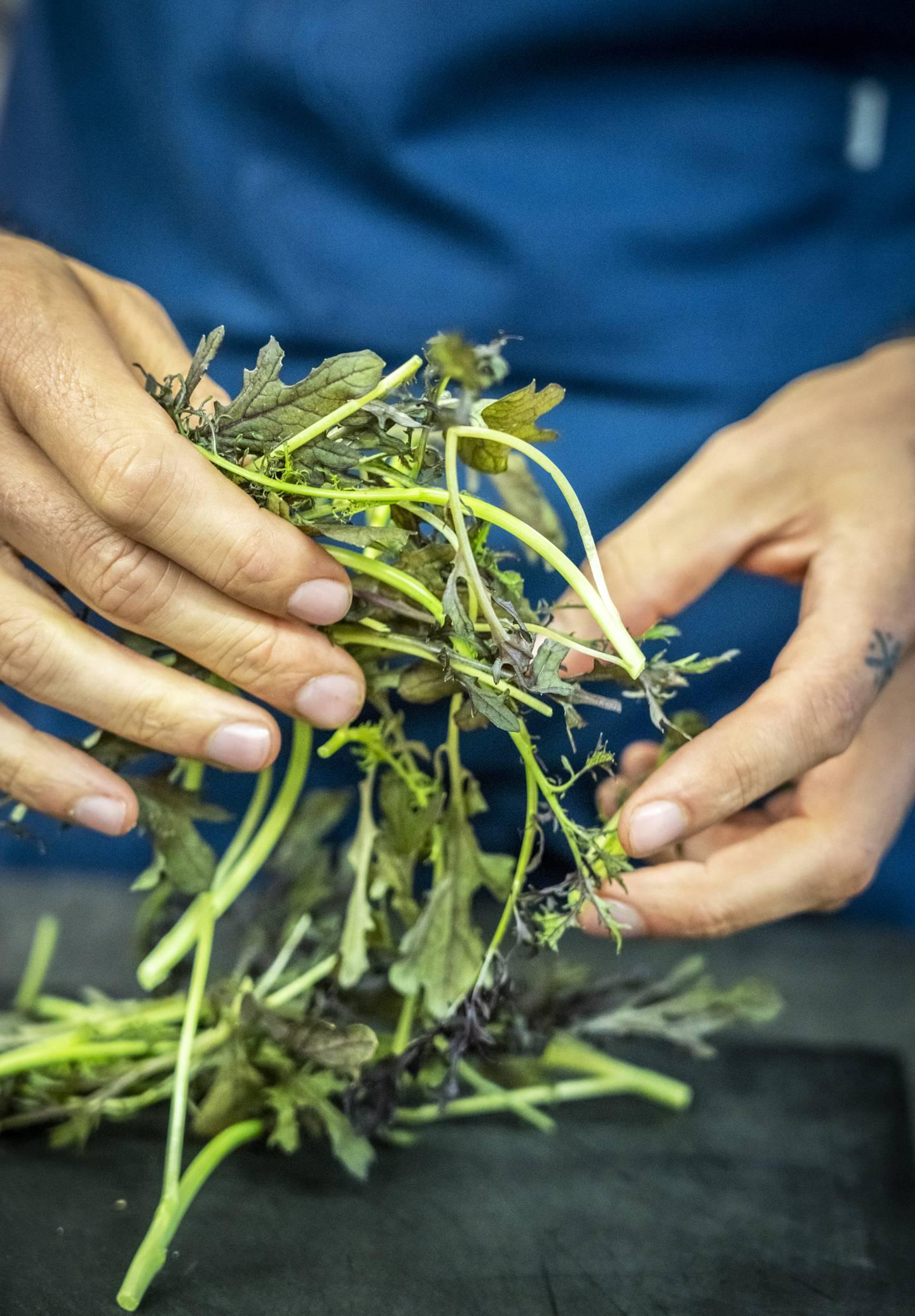 Bruk den salaten du har, og bland gjerne små blader av flere sorter.