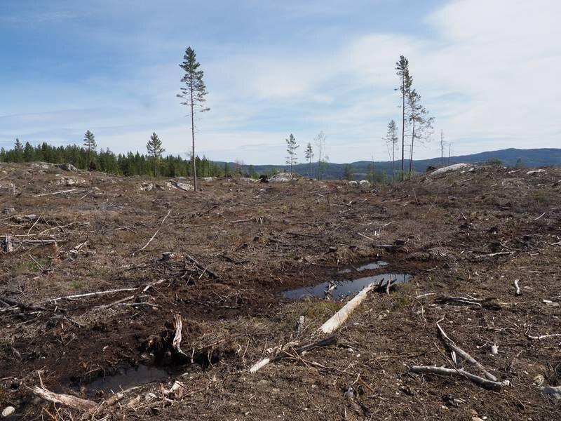 Ser kan det se ut etter at flatehogst er blitt gjennomført. Alternativet er plukkhogst hvor bare enkelte trær hugges, noe som blant annet innebærer langt bedre muligheter for å opprettholde det rike biomangfoldet i skogene.