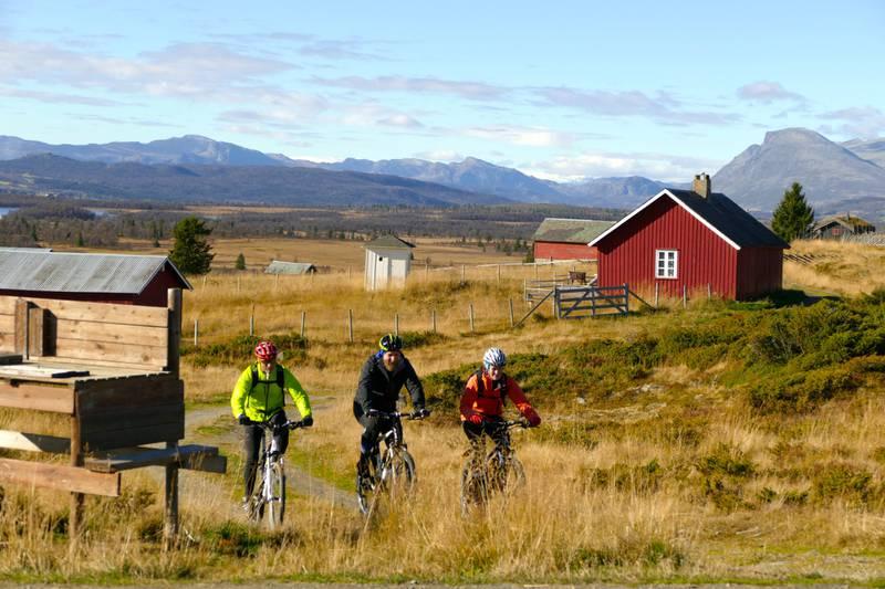 På Golsfjellet og i Valdres går det et finmasket nettverk av flotte sykkelveier mellom levende støler.