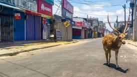 Dyrene har tatt leveområdene tilbake – det skaper bekymring