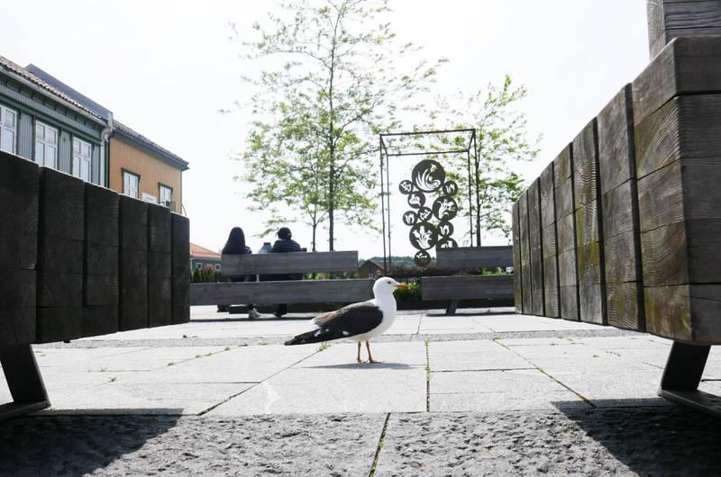 UTILPASS: Ifølge ornitolog Bjørn Frostad bør det innføres tiltak som gjør at måker velger å bo andre steder enn i byen.