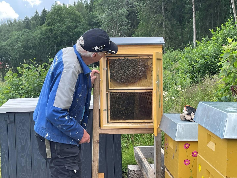 Bjarne Hjeltnes går på birøkterkurs, for å lære å røkte bier. Her foran observasjonskuben, som burkes for å vise livet i en bikube.
