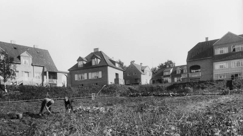 HASLE HAGEBY CIRKA 1921: Arbeiderboligene for Freias ansatte ble tegna av arkitektene Morgenstierne og Eide og reist 1912–14. Også kalt Haslebyen og Freiabyen.  FOTO: ANDERS BEER WILSE/OSLO MUSEUM