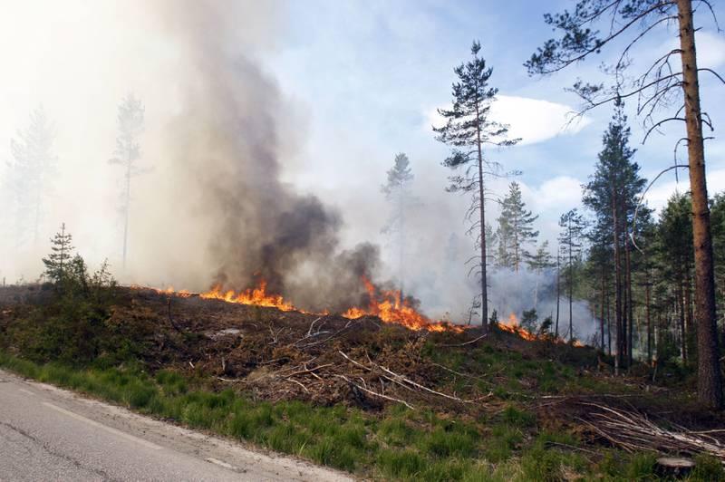 Bildet er fra en brann i Froland kommune i Aust-Agder i 2008.