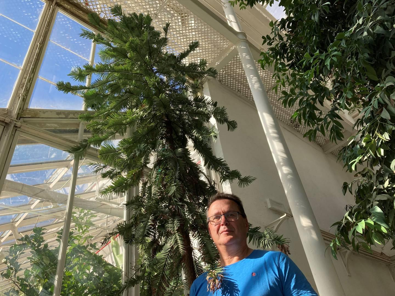 Det australske «dinosaurtreet» i Botanisk hage på Tøyen, ruver allerede godt over to meter lange Oddmund Fostad, som er fungerende leder av Botanisk hage. Wollemia nobilis kan strekke seg til hele 40 meter i fullvoksen tilstand.