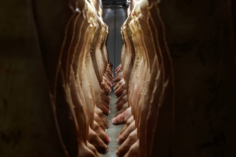 Så har vi atter en gang fått se hvor fælt griser kan leve i norske fjøs. Hvor går grensa for hva vi kan tåle?
