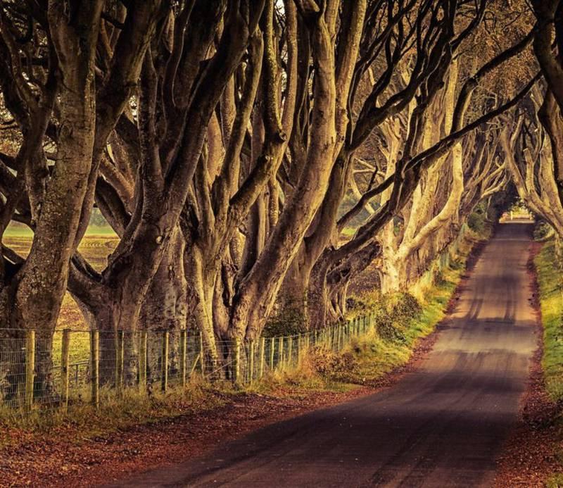 Denne magiske alleen i Dark Hedges i County Antrim er Kingsroad i serien. FOTO: VISIT IRELAND