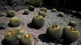 Smugler tatt med 1.000 kaktuser og sukkulenter festet til kroppen