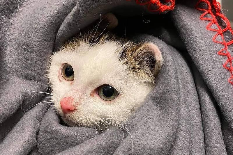 Denne kattungen ble reddet sammen med resten av kullet og moren sin i mars.