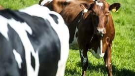 Husdyrgjødsel kan bli et problem for Rogaland