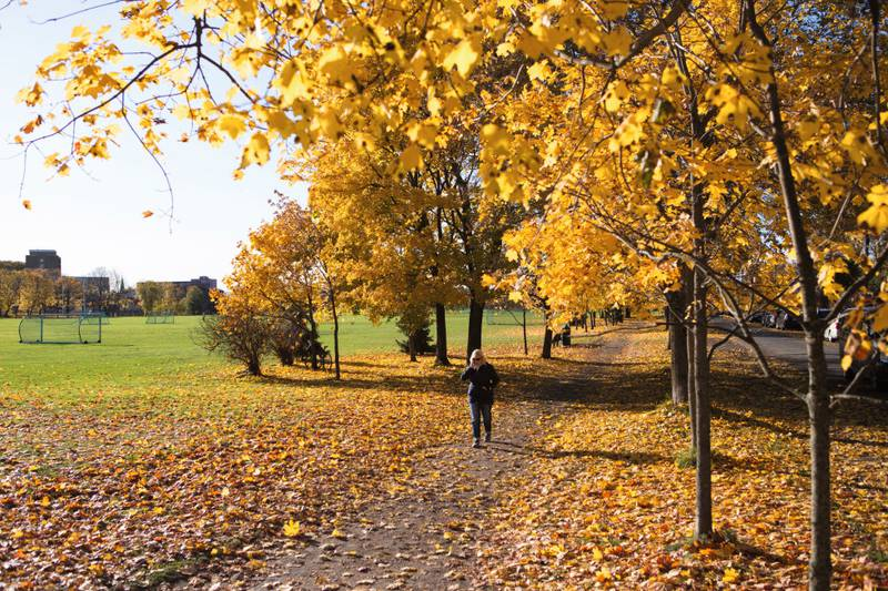 Oppdag nye steder i hovedstaden. gå en tur i en ny park, elvelangs, eller i de dødes fotspor!