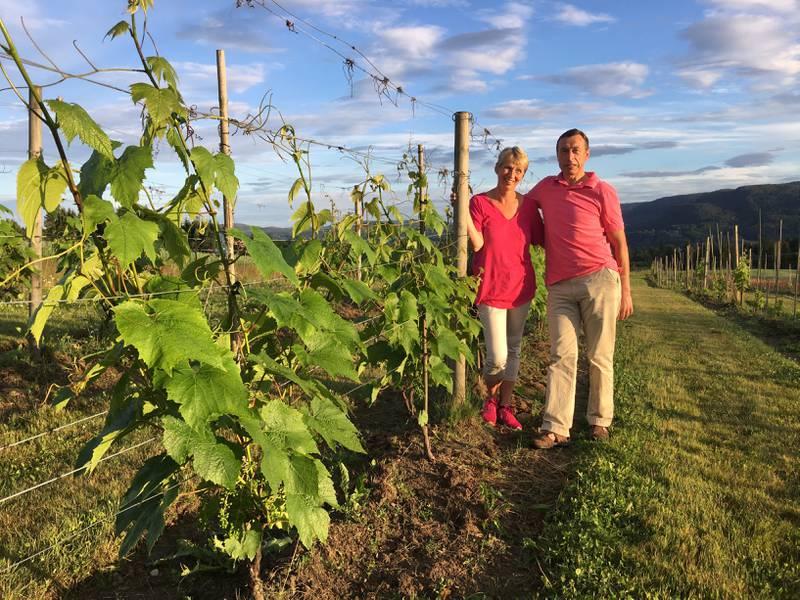 Vinmarker – i Telemark? Jo da, det går an! Vinbøndene Wenche Hvattum og Joar Sættem har eksperimentert med drueslag som tåler litt kulde.