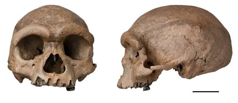 Denne hodeskallen kan tilhøre en menneskeart som er nærmere det moderne mennesket enn neandertalerne.