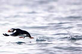Verner matfat for sjøfugler