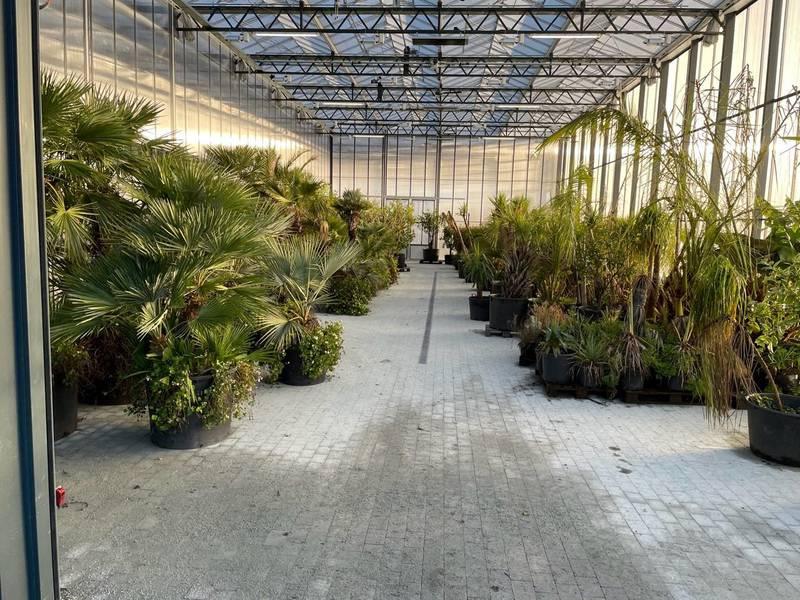 Halvparten av det 4000 kvadratmeter store drivhuset til Flor & Fjære skal være til produksjon av blomster, grønnsaker og urter. Det skal også være jungelrestaurant i midten. Foto: Privat