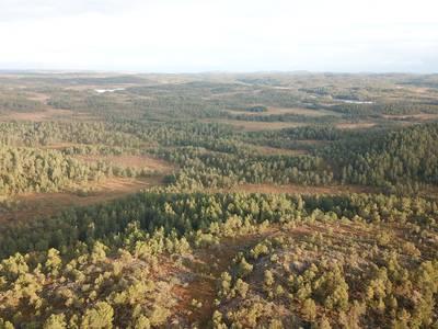 Aksjeselskaper kjøper opp Norges skog