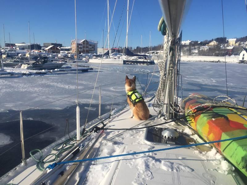 Is i havnen ved Finnsnes.